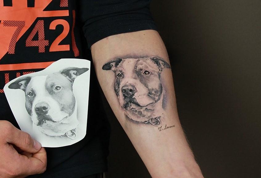 Šuns tatuiruotė