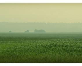 """Early Morning Landscape. The Meadow"" (50X23cm) © Tatjana Iljina"