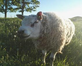 Gyvūnų auginimas ir pardavimas / Gintautas Činskis / Darbų pavyzdys ID 404295
