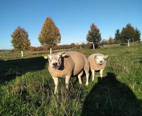 Gyvūnų auginimas ir pardavimas / Gintautas Činskis / Darbų pavyzdys ID 404303
