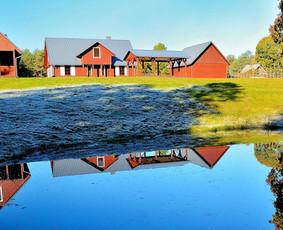 Kaimo turizmo sodybos Druskininkuose nuoma- Dzūkijos uoga