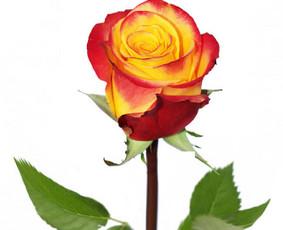 Gėlių pristatymas Visoje Lietuvoje / Gėlių Fėja / Darbų pavyzdys ID 496251
