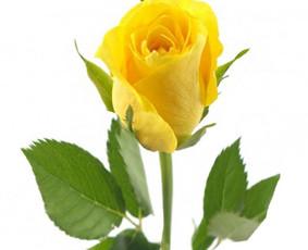 Gėlių pristatymas Visoje Lietuvoje / Gėlių Fėja / Darbų pavyzdys ID 496253