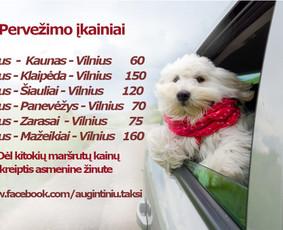 Gyvūnų taksi - tarpmiestinis augintinių pervežimas
