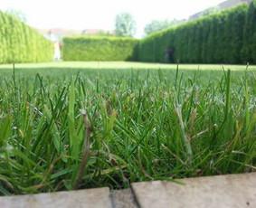 Aplinkos tvarkymas, apželdinimas, aeravimas, vejos įrengimas