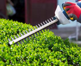 Aplinkos projektavimas, apželdinimas, priežiūra / Saulius / Darbų pavyzdys ID 620429