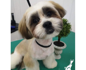 Reda- VizguVizgu šunų kirpykla