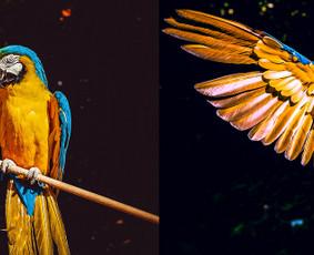Profesionalus nuotraukų redagavimas, retušavimas / picapex / Darbų pavyzdys ID 633709