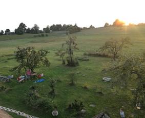 Aplinkos tvarkymas, genėjimas, vejos pjovimas, gyvatvorių ki