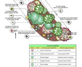 Aplinkos projektai, apželdinimas ir želdinių priežiūra.