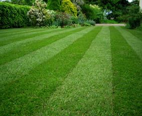 Žolės Pjovimas. Pastovi priežiūra. Vienkartiniai sutvarkymai