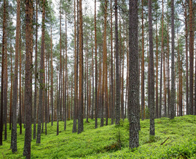Miškų traukimas