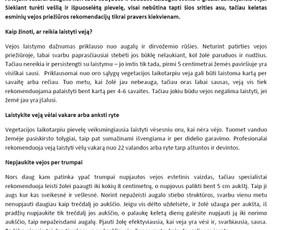 Reklaminiai tekstai Straipsniai Aprašymai (LT/ENG) / Irena J. / Darbų pavyzdys ID 688279