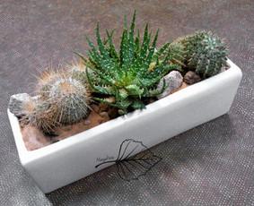 Vazoninių kambarinių ir lauko augalų kompozicijų kūrimas, sodinimas, persodinimas. Interjero, eksterjero dekoras augalais ir jų kompozicijomis.