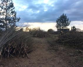 Sklypų tvarkymas krūmų, medžių pjovimas