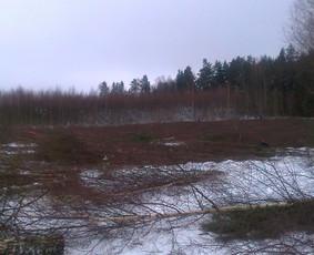 Tvarkome apleistus laukus,zemes.mokame iki100eu/ha