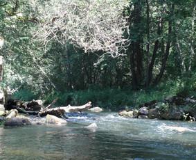 Baidarių nuoma Aukštaitijoje beveik visomis upėmis
