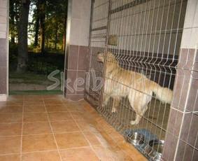 Šunų ir kačių viešbutis