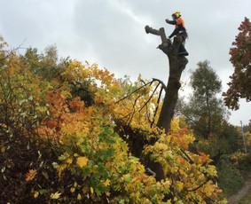 Pavojingų medžių pjovimas-aplinkos tvarkymo darbai
