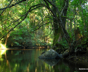 Baidarės Žeimenos ir Kiaunos upėmis. Nakvynių užsakymas. / Baidares.com        8 650 69750 / Darbų pavyzdys ID 99162