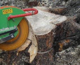 Pavojingų medžių genėjimas ir šalinimas, kelmų fre
