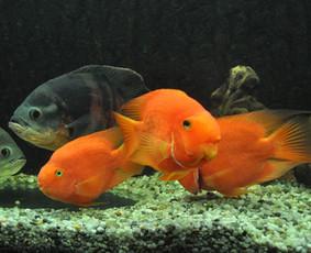 Akvariumų įrengimas ir priežiūra