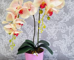 Sandrija - gėlės ir viskas šventėms / Sandrija / Darbų pavyzdys ID 883787