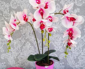 Sandrija - gėlės ir viskas šventėms / Sandrija / Darbų pavyzdys ID 883793