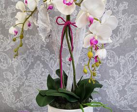 Sandrija - gėlės ir viskas šventėms / Sandrija / Darbų pavyzdys ID 883795