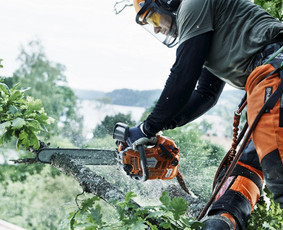 Pavojingų medžių genėjimas ir šalinimas, kelmų frezavimas