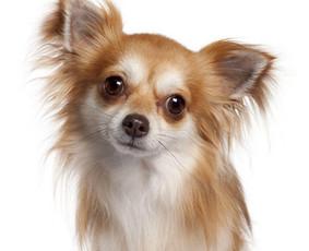 Šuniukų kirpėja