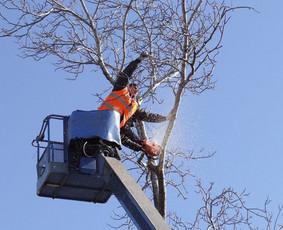 Avarinių medžių,žolės,krūmų pjovimas.Aplinkos tvarkymas