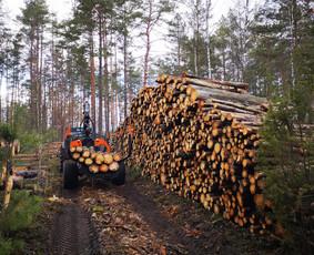 Medienos, biokuro kirtimo ar ištraukimo paslauga