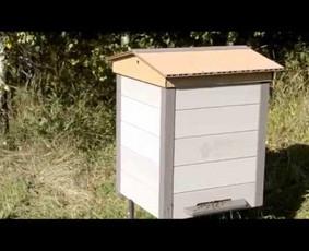 InoWood avilys iš BIO kompozito. Buvo daug abejojančių ar bitėms tiks avilys iš medžio kompozito profilių, bet kaip matome, jos puikiai ten gyvena ir neša medų.