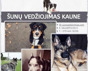 Šunų vedžiojimas Kaune ir naminių gyvūnų priežiūra