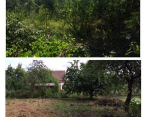 Įrengiu veją! Aplinkos tvarkymas ir priežiūra.