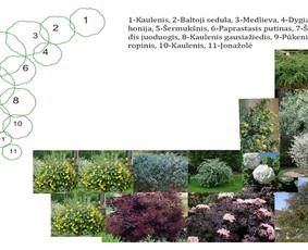 Aplinkos apželdinimo projektavimas / Rolanda / Darbų pavyzdys ID 228171