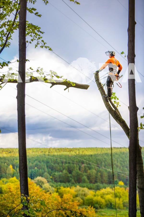 ?Avarinių ir pavojingų medžių pjovimas įvairaus sudėtingumo sąlygomis. ?Arboristų-aukštalipių (medžių priežiūros specialistų) paslaugos. ?Aukštuminis medžių šalinimas.