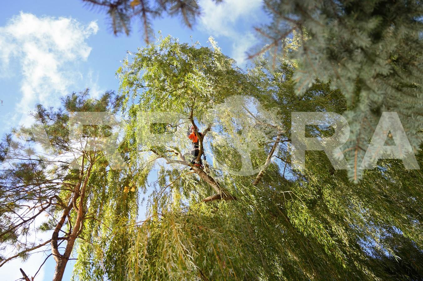 ?Medžių būklės įvertinimas.  ?Arboristų-aukštalipių (medžių priežiūros specialistų) paslaugos. ?Medžių ir krūmų genėjimas, formavimas.  ?Vaismedžių ir vaiskrūmių genėjimas, purškimas.