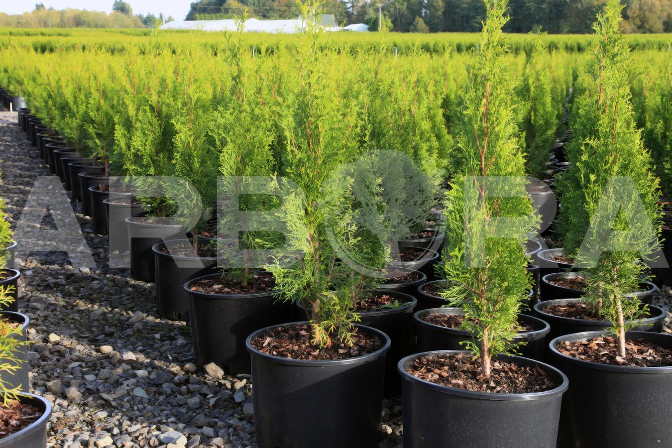 ?Medžių ir krūmų parinkimas. ?Vaismedžių sodinimas. ?Didelių medžių ir krūmų persodinimas/perkėlimas. ?Dekoratyvinių augalų priežiūra bei paruošimas žiemai. ?Augalų apsauga nuo kenkėjų.