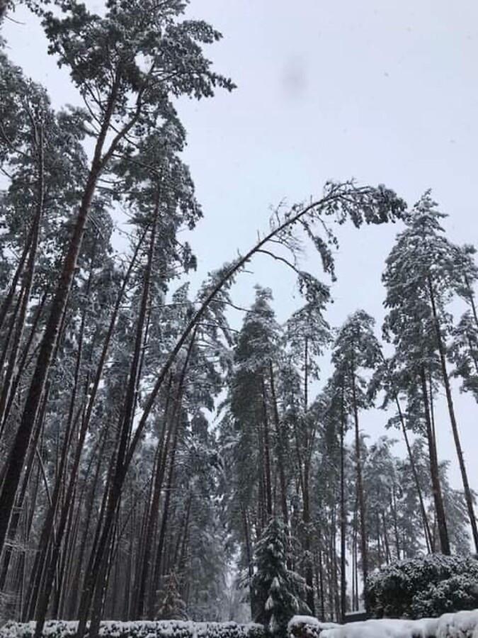 Pavojingai pasvirusiu, apsnigtų medžių gelbėjimas/valymas