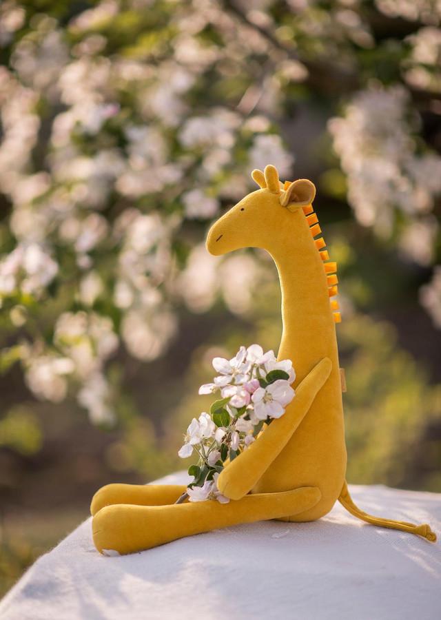 Geltona žirafa