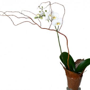 Florisima, gėlių salonas / Viktoras & Co (Florisima) / Darbų pavyzdys ID 374