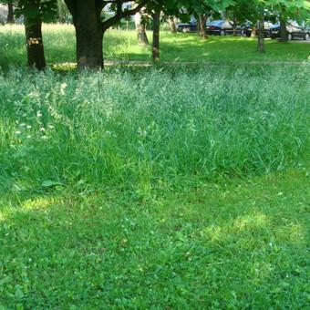 Daugiabučių kiemų žolės pjovimas