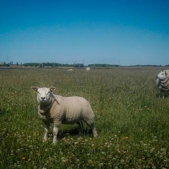 Gyvūnų auginimas ir pardavimas / Gintautas Činskis / Darbų pavyzdys ID 404299