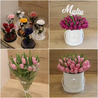 Memelio gėlės / Silvija / Darbų pavyzdys ID 407931