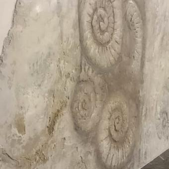 """Židinio marmuro apdailos dizaino projektavimas ir dekoravimas.  """"Fosilijos"""" (detalė) Veneciano mix medija ( tekstūra + tapyba)  Autorius : Giedrė (Mėnulėja)"""