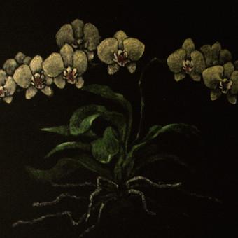 """""""Orchidėjos"""", aliejus, drobė"""