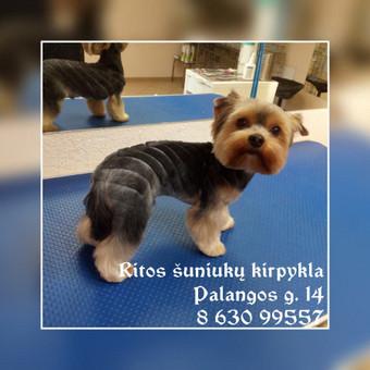 Ritos šuniukų kirpykla / Rita / Darbų pavyzdys ID 409493