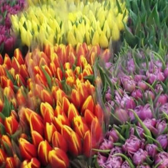 Gėlių Bliuzas – gėlės & muzika, kad Jūsų Šventė būtų pati įsimint / Gėlių Bliuzas / Darbų pavyzdys ID 420597